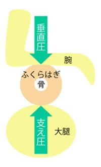 img_fukurahagi09